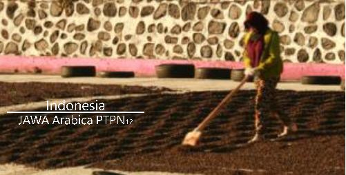モカジャバの進化系「ジャワ・アラビカ PTPN12」